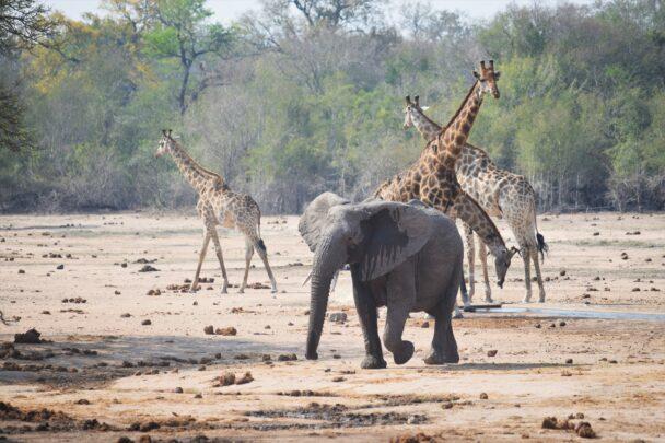 Op Safari in Zuid-Afrika met de camper