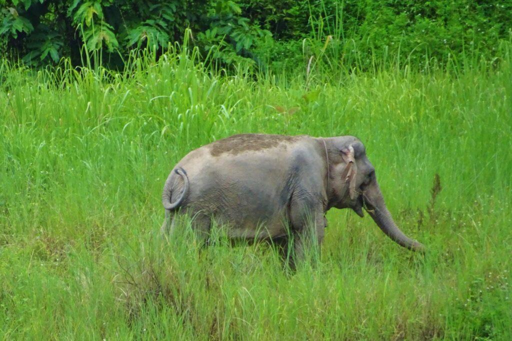 Tijdens backpacken in Laos, zie je overal olifanten rondlopen!