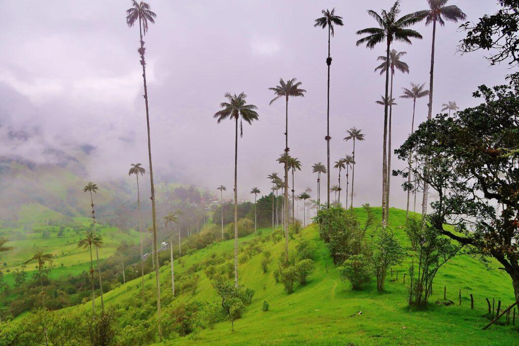 Valle de Cocora hoogste palmbomen ter wereld tijdens rondreis Colombia