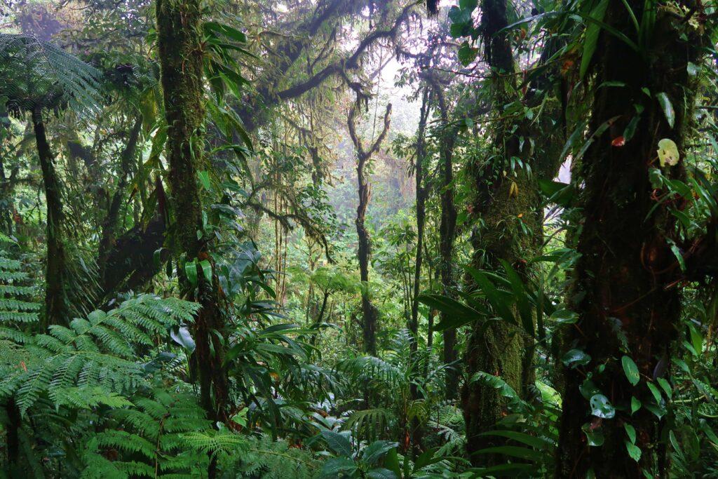 Jungle Costa Rica Monteverde
