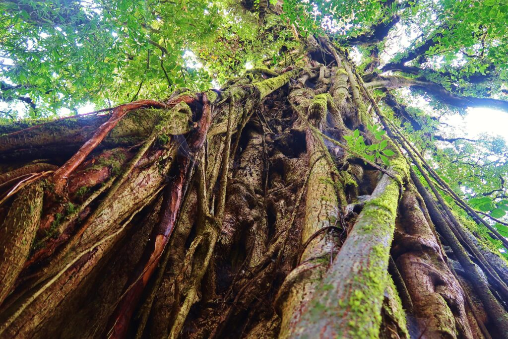 Boom Jungle Costa Rica Monteverde