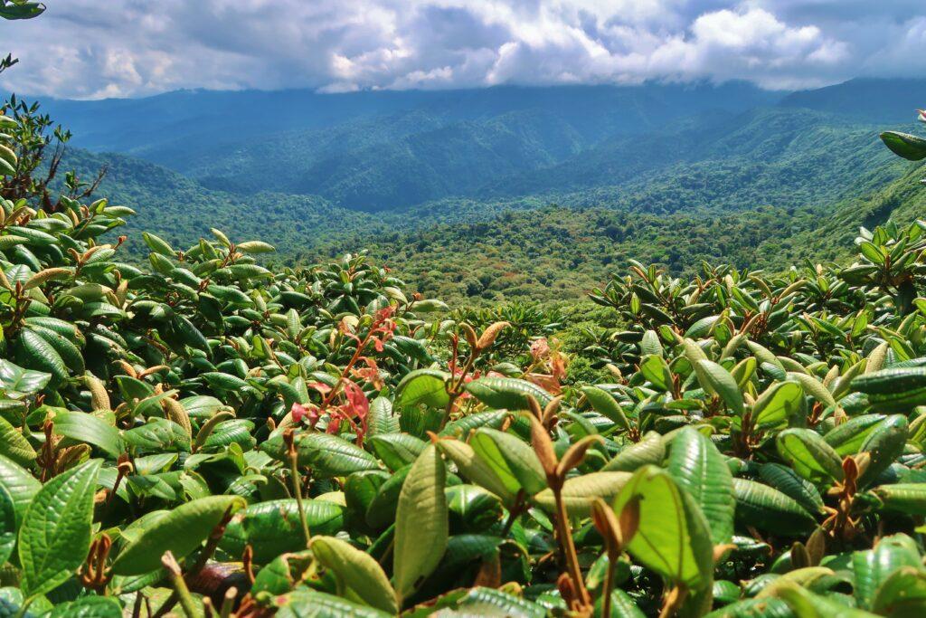 Costa Rica Jungle uitzicht Monteverde